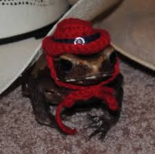 Toad Halloween Costume Tiny Pet Halloween Costume Western Cowboy Hat Frogs Toads