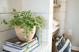Indoor Plants Low Light Hgtv by Plants Of Season 4 Joanna Gaines Shares Her Fixer Upper Secret
