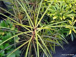 native plants of new zealand t e r r a i n taranaki educational resource research analysis