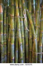 close up of bundles of sugar cane in mexico m garrett stock photo