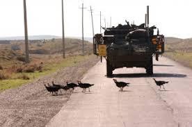 2010 11 01 Archive Wild Turkeys Afghanistan Akio U0027s
