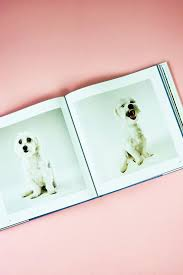 dog coffee table books the life and love of dogs coffee table book lewis blackwell pipe and