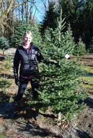 mountain creek christmas tree farm in snoqualmie seattle bloggers