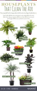 benefits of houseplants 10 houseplants that clean the air urban planters