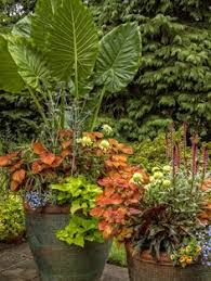 design tips for container gardens container gardening ideas