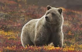 Alaska Travel Tips images Alaska travel glaciers to gold rush best travel tips jpg