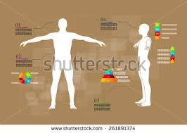 Picture Diagram Of The Human Body Human Body Diagram Stock Images Royalty Free Images U0026 Vectors