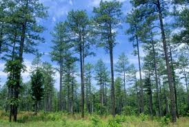 North Carolina forest images National forests in north carolina planning jpg