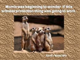 Mere Cat Meme - meerkat or mere cat funny quotes pinterest adorable animals