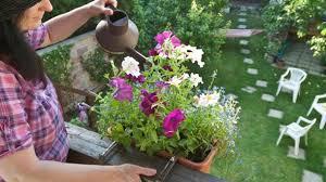 balkon grã npflanzen balkonpflanzen für sonnige und schattige balkone