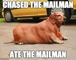 Wiener Dog Meme - fat dachshund meme 1 doxie love pinterest dachshund meme