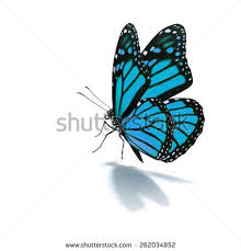klv 62 butterfly pic high resolution awesome butterfly