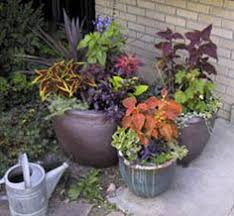 Fragrant Container Plants - plant a fragrant winter container garden u003e http www
