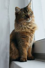 3839 best cats images on pinterest animals kitty cats and cats
