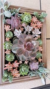 Hanging Succulent Planter by Best 25 Succulent Frame Ideas On Pinterest Succulent Wall