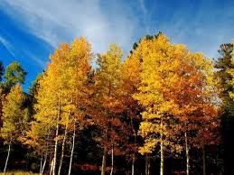 u0027s arizona u0027s fall colors
