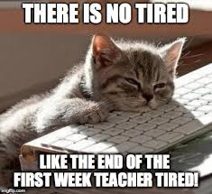 Asian Teacher Meme - tired cat there is no tired like the end of the first week