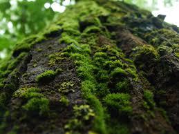 tree moss 1 by torr3z on deviantart