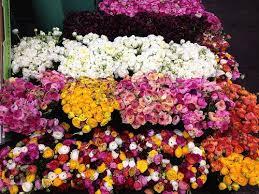 flowers wholesale harrys wholesale nursery best wholesale flowers plants australia