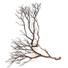 manzanita branches for sale 25 best manzanita branches ideas on wedding ceremony
