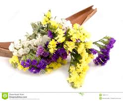 statice flowers statice flowers limonium sinuatum royalty free stock photography