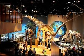 perot museum of nature and science reviews u s news travel