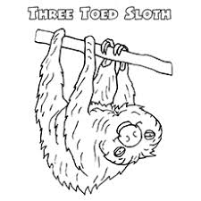 coloring pages sloth coloring