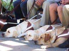 Dogs For The Blind Jobs A Man Sits On A Log Next To His Guide Dog Service Dogs