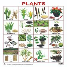 buy plants chart from kindercart com best online kids store in india