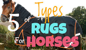 Types Of Rugs 5 Types Of Horse Rugs For Horses