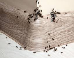 How To Kill Ants In The Kitchen by The Ultimate Guide To Ants Control How To Get Rid Of Ants In Home