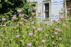 plants native to ohio gardiner lab department of entomology