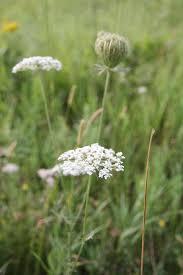 warm season weeds hgtv