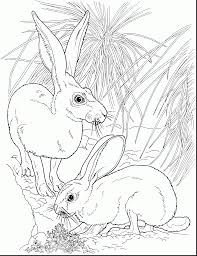 superb rabbit coloring pages printable with rabbit coloring pages