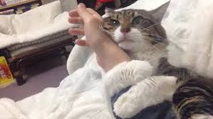 Cat Hug Meme - cat won t let go of its owner as it hugs their arm every time they