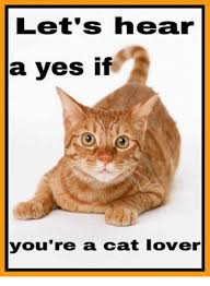 Cat Lover Meme - let s hear a yes if you re a cat lover meme on me me