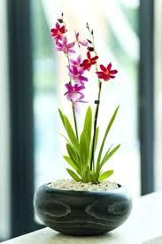 Best Flowers For Office Desk Best Flowers For Office Desk Plants Ideas Large Size Of
