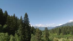 mountain forest 2k stock 268 454 632 framepool