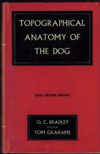 Dog Anatomy Book Dog Anatomy Ebay