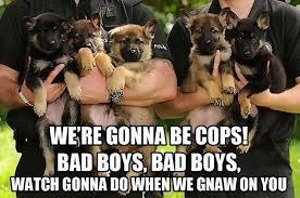 Funny German Shepherd Memes - our favorite herding dog memes