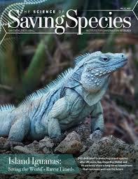 iguana island island iguanas saving the world u0027s rarest lizards reptile