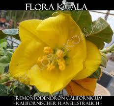 B Otisch Online Kaufen Flora Koala Exotische Pflanzen
