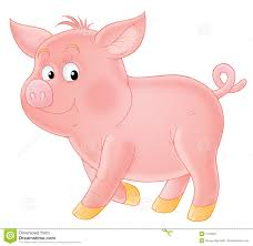 pig pictures kids search