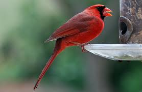 which bird seed will bring bird to your yard in nj
