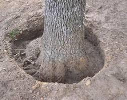 tree base work holistic tree care inc