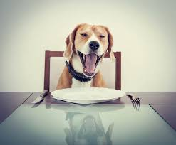 dogs at dinner table the downsides of homemade dog food safebee