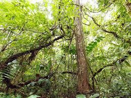 s favorite mode of travel the liana vine chokes a