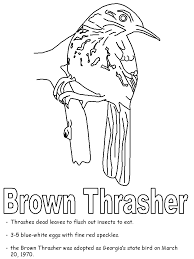 brown thrasher coloring