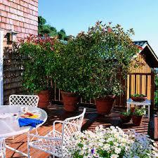 Tropical Fragrant Plants - garden design garden design with tropical fragrant plants nice