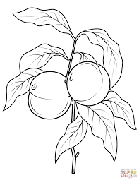 whole fruites and cross section of a white peach coloring page